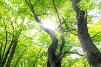 160808 green-trees-looking-up-1337595